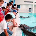 Kids Summer Camp at Dubai Dolphinarium-2sm
