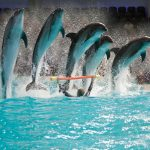 Dubai Dolphinarium celebrates UAE's 40th Anniversary