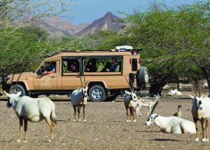 Desert_Islands_by_Anantara_Abu_Dhabi-Wildlife-encounters