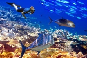The diver over corals and tropical fishes