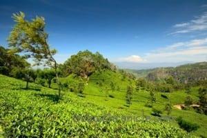 Sri Lanka (1)