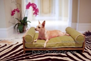 furniture-for-pet