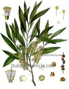 tea - tree